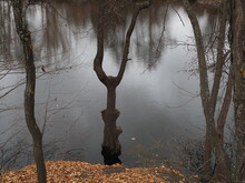 Forked Tree Trunk Standing In The Water In High Water