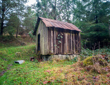 Rustic Woodshed In The Woods With Concrete Slabs And A Tin Roof Surrounded By Grass And Trees On A Cold Autumn Day