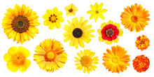 Group Of Different Yellow And Orange Garden Flowers, Isolated