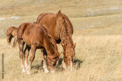 Foto mare and foal pasturing on barren slope, near Filetto lake, Abruzzo, Italy