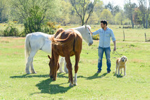 Brown And White Horse With Man And Dog