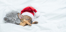 Toy Terrier Puppy Wearing Red Santa's Hat And Gray Kitten Sleep Together Under A White Blanket On A Bed At Home. Empty Space For Text