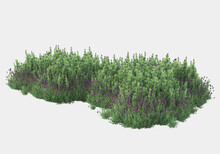 Wild Grass Isolated On Grey Background. 3d Rendering - Illustration