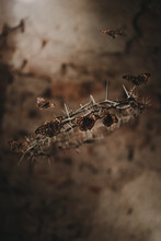 Little Fragile Butterflies Flying Over Dangerous Sharp Crown Of Thorns With Barbed Spikes On Blurred Background