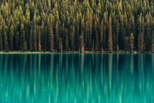 Trees Reflecting In A Glacial Lake, Alberta, Canada