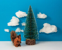 Creative Composition Of Christmas Tree And Squirrel With Clouds On Blue Sky, Nature Concept, Front View
