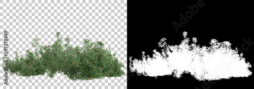 Photo Field of wild grass from mountain isolated on background with mask