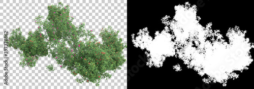 Field of wild grass from mountain isolated on background with mask. 3d rendering - illustration