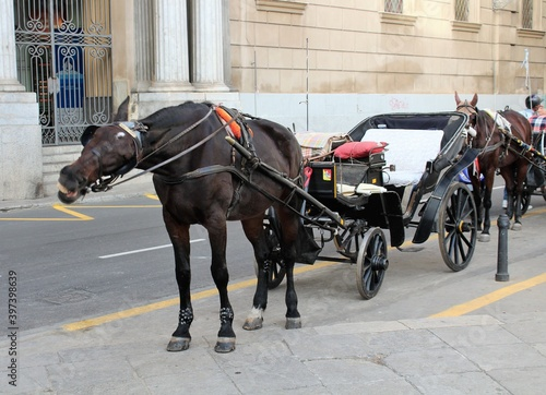 Carta da parati evocative image of horse with carriage for waiting tourists in the center of Pal