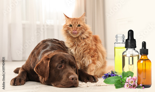 Fototapeta Aromatherapy for animals. Essential oils near dog and cat on background obraz