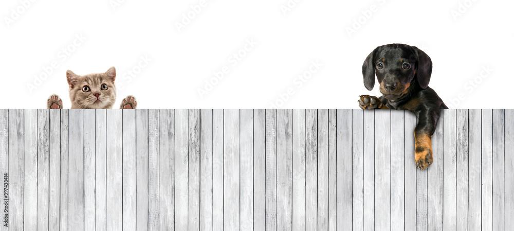 Fototapeta One little puppy dog with board of wooden plank
