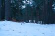 krajobraz góry drzewa natura śnieg las