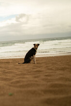 Stray Dog On The Beach, Captured In Kenitra,Morocco