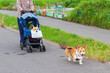 ペットカートに乗って散歩する歩けなくなった老犬と若い犬