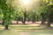 Blurred Green Park In The City With Sun Ray For Refreshing Green Background Walk Way In Garden Green Trees Under Forests