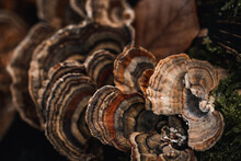 Colourful Layered Mushrooms In The Forest With Great Details, Close-ups, Macrophotography