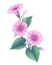 Hand Drawn Pink Bindweed Flower With Leaves