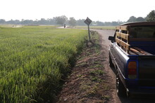Close Up The Small Blue Pick Up Truck And Concrete Road     Into The Rice Field