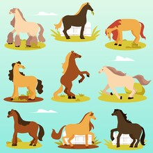 Cute Thoroughbred Pony Horses In Various Poses A Vector Illustrations.