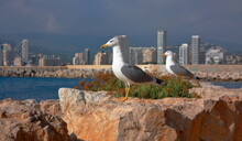 Two Seagulls Standing On A Rock Looking At A Cloudy City.