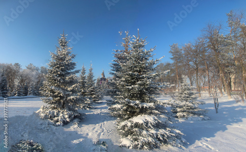 CHRISTMAS TREES UNDER THE SNOW IN THE FOREST #397771821