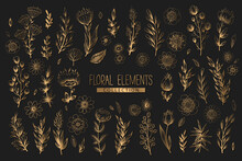 Collection Of Vector Floral Elements With Gold Hand Drawn Flowers, Leaves Branches And Herbs Isolated On Black Background. Vintage Botanical Illustration For Print, Fabric, Wallpaper, Card