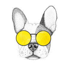 Sketch French Bulldog Dog Head Hand Drawn Illustration. Doggy In Yellow Sunglasses, Isolated