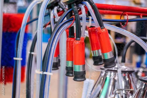 Fototapeta Red teat cups of automated cow milking suction machine at cattle dairy farm, exhibition, trade show: close up. Farming, automated technology equipment, agriculture industry, animal husbandry concept obraz