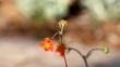 Czerwony kwiatek na łodydze.