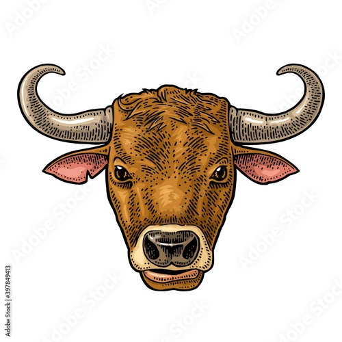 Bull head. Hand drawn in a graphic style. Vintage vector engraving illustration for info graphic, poster, web. Isolated on white background.