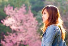 Photographer Girl Shooting From Prunus Cerasoides Wild Himalayan Cherry.