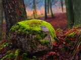 Fototapeta Kamienie - Baśniowy kamień pokryty mchem