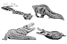 Graphical Set Of Crocodiles Isolated On White Background, Vector Illustration