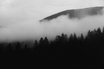 Czarno biały krajobraz bieszczadzkiego lasu iglastego z unoszącymi się nad nim chmurami oraz sylwetką wysokiej góry na horyzoncie, Bieszczady, Polska