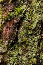 Rough Moss On Bark Texture