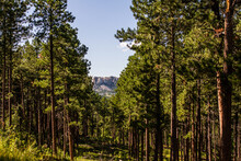 Look At Mount Rushmore Through Alley Between The Trees In America