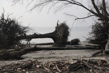 """Uprooted Trees After A Destructive Cyclone Named """"Bulbul """" Hit The Largest Mangrove Forest Sundarbans In Bangladesh"""