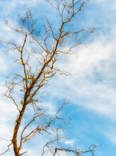 Tree Devoid Of Leaves And Sky