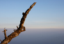 Natural Leafless Winter Tree On Blue Sky Background