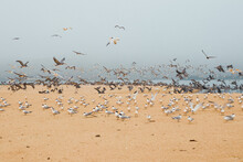 Sand Beach And Flock Of Birds, California Central Coast