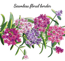 Seamless Border With Phlox Flowers Isolated On White.