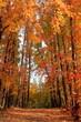針木浄水場 オレンジ色に染まる 紅葉 (高知県 高知市)