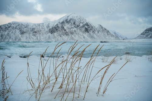 Fotografie, Obraz norway coast in winter with snow bad cloudy weather
