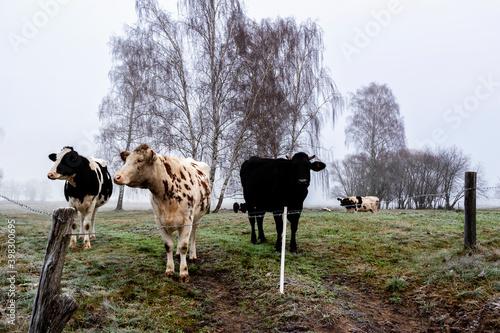 Fototapeta Jesienny krajobraz Doliny Narwi, Podlasie, Polska obraz