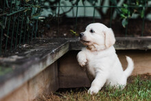 Puppy Paws At Leaves