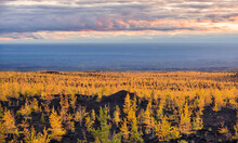 Evening Scenery Above Dead Forest Area With Recovered Ecosystem In Kamchatka.