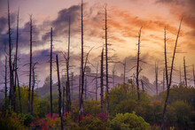 Dry Burnt Trees On The Background Of Colorful Sunset Cloudy Sky.
