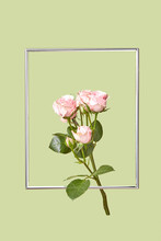 Decorative Flying Frame With Fresh Roses.