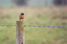 Stonechat Sitting On A Wooden Fence Post
