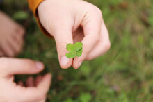 Child's Hand Holding Lucky Four Leaf Clover Plant